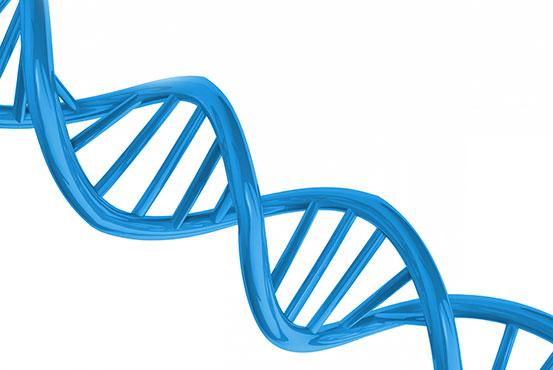 Tvillinger til DNA test